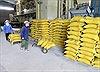Cạnh tranh bình đẳng để xuất khẩu gạo vươn tầm quốc tế