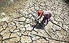 Hạn, mặn đồng bằng sông Cửu Long: Lúa chết hàng loạt, nước sạch cạn khô