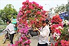 Hoa Tết đã ngập phố phường, hoa lan, hoa mai vẫn 'nổi trội' nhất