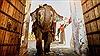 Nền kinh tế Ấn Độ là 'con voi' bắt đầu chạy