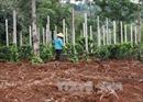 Sớm hoàn thiện Đề án về quản lý đất đai, ứng phó với biến đổi khí hậu tại 5 tỉnh Tây Nguyên