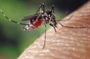 Sáng kiến mới giúp nâng cao hệ thống cảnh báo sớm sốt xuất huyết