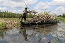 Lũ  và triều cường khiến mực nước sông rạch Hậu Giang dâng cao, nguy cơ lũ lớn