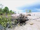 Sóng biển đánh trôi hàng chục km bờ biển Cà Mau