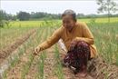 Người phụ nữ Khmer 'ăn cơm nhà lo chuyện thiên hạ'