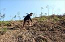 Xác minh, làm rõ trách nhiệm vụ phá rừng phòng hộ tại Lăng Chua, Tuyên Quang