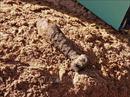 Đào móng nhà phát hiện quả đạn cối còn sót lại sau chiến tranh