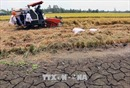 Bão có xu hướng hoạt động muộn; nguy cơ hạn hán, xâm nhập mặn trong năm 2019
