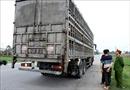 Lập 2 chốt kiểm soát vận chuyển lợn từ Bắc vào Nam