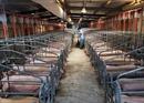 Khủng hoảng thịt lợn khiến lạm phát Trung Quốc cao nhất 6 năm