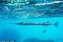 Bị cá đâm xuyên cổ, thiếu niên sống sót thần kỳ