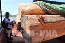 Cơ quan Kiểm lâm không quản lý việc nhập khẩu gỗ tại khu vực biên giới