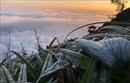 Đêm 5/12, vùng núi cao Bắc Bộ có băng giá và sương muối
