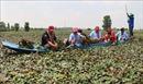 Hướng đi cho du lịch sinh thái ở Đồng bằng sông Cửu Long - Bài 1: Đưa du lịch về nông thôn
