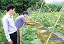 Thực hiện chính sách giảm nghèo bền vững cho các huyện miền núi ở Quảng Ngãi