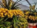 Thành tỷ phú phố núi nhờ trồng phong lan