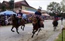 Ngựa thồ tung vó trên cao nguyên Bắc Hà