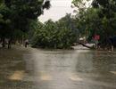 Dự báo tiếp tục có mưa to từ Nghệ An đến Quảng Trị