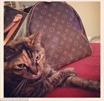 Những con mèo 'vương giả'