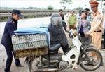Hải Phòng ngăn chặn 2 vụ vận chuyển gia cầm nhập lậu