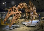 Truy tìm cuộc sống của loài khủng long đầu tiên biết bơi
