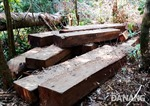 Vụ rừng đầu nguồn bị tàn phá: Sẽ xử lý đến cùng