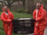 Phát hiện virus cúm gia cầm H5N8 tại bang thứ hai ở Đức