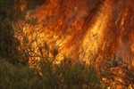 Cháy rừng lan rộng tại miền Nam Australia