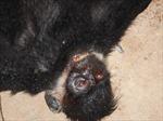Khởi tố vụ án hình sự về vi phạm quy định bảo vệ động vật