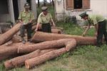 Quảng Bình: Bắt giữ xe chở hơn 3m3 gỗ lậu
