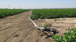 Tái cơ cấu nông nghiệp: Bài học từ Israel - Bài 1