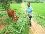 Hộ cận nghèo ở Phú Thọ được hỗ trợ vốn hiệu quả