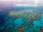 Mỹ và Cuba cân nhắc lập khu bảo tồn chung trên biển