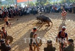 Không tổ chức nghi lễ đâm trâu trong Lễ hội Buôn Đôn