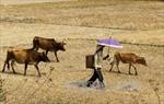 Tây Nguyên khát nước trước đỉnh mùa khô