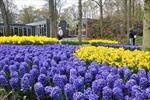 Keukenhof, lễ hội hoa tulip được yêu thích nhất châu Âu