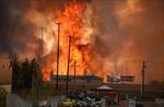 Tỉnh Alberta - Canada ban bố tình trạng khẩn cấp