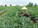 Tăng cường hỗ trợ nông dân trong sản xuất nông nghiệp