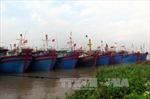 Thuyền về kín bến Nam Định, Quảng Ninh tránh bão