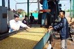 Công nghiệp chế biến cà phê ở Đắk Lắk còn hạn chế
