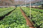 Nên thay đổi cơ cấu cây trồng, tiết kiệm nước