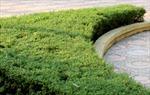 Thông tin về việc nhận công trình, không nhận cây tại Hà Nội