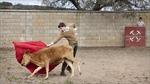 Tương lai môn đấu bò tót ở Tây Ban Nha