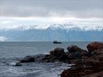 Tiếng động bí ẩn từ Bắc Cực khiến động vật chạy trốn