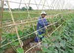 Thủ tướng quyết định xuất cấp hạt giống cây trồng hỗ trợ haiđịa phương