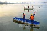 Bốn nguyên nhân khiến cá chết hàng loạt ở hồ Hà Nội