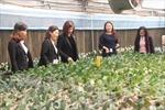 Nguồn vốn Agribank thúc đẩy tái cơ cấu nông nghiệp gắn xây dựng nông thôn mới