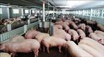 Nhiều sai phạm trong nhập khẩu nguyên liệu kháng sinh