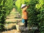 Kiên Giang cần khoảng 77.510 tỷ đồng tái cơ cấu ngành nông nghiệp