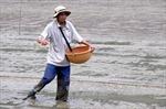 800 ha lúa non bị ngập úng vì mưa